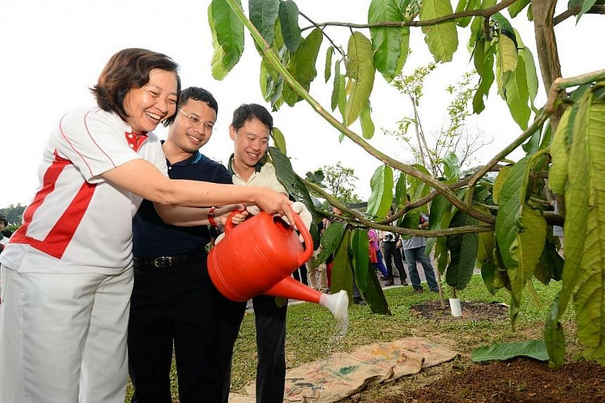 Dr Lee Bee Wah with Mr Desmond Lee and NParks CEO Kenneth Er planting a tree at the Springleaf Nature Park. -- PHOTO: NPARKS