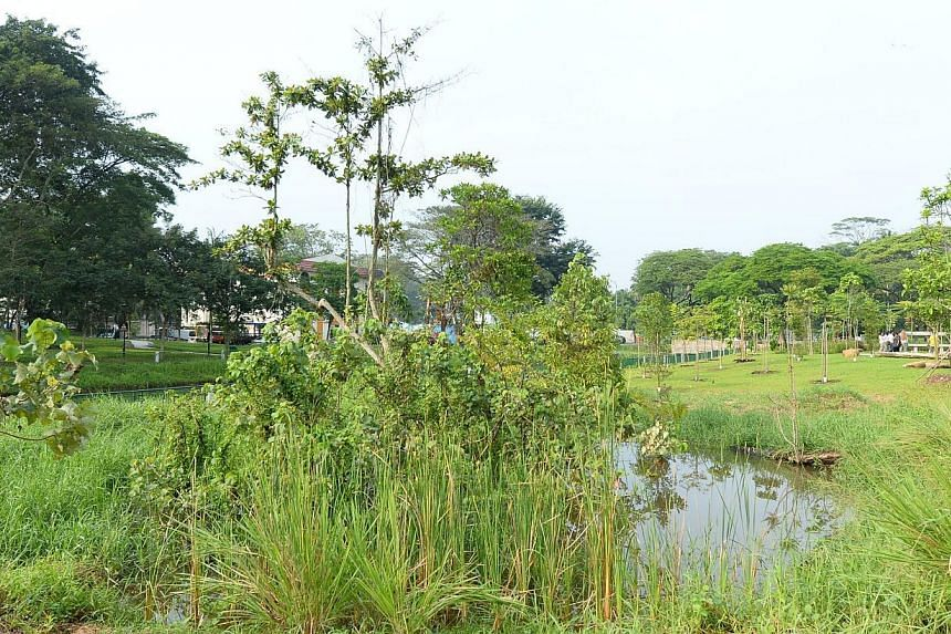 The Springleaf Nature Park, the first of four new nature parks around the Central Catchment Nature Reserve, was officially opened on Saturday.-- ST PHOTO: CHEW SENG KIM