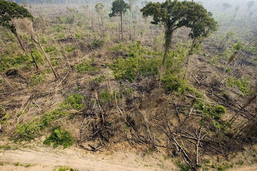 An aerial view taken on Nov 29, 2009 shows a burnt out sector of the Jamanxim National Forest at an illegal settlement , in the Amazon state of Para, nothern Brazil. Crowning a landmark review, the Intergovernmental Panel on Climate Change (IPCC