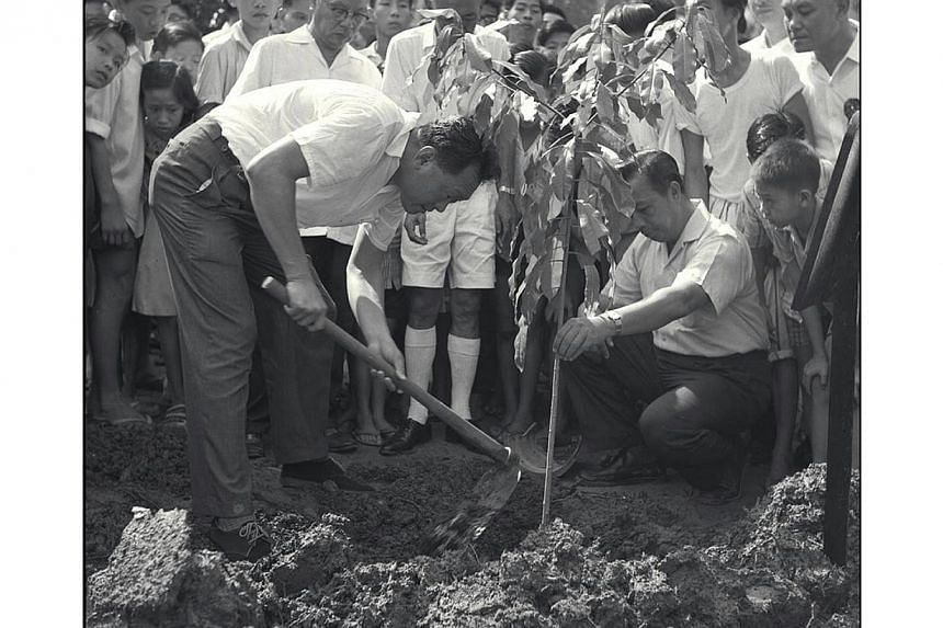 Prime Minister Mr Lee Kuan Yew planting a tree during his tour of the Serangoon Garden constituency in 1963. -- PHOTO: ST FILE