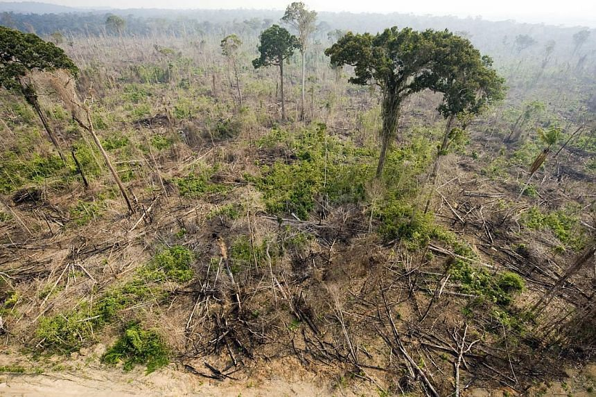 An aerial view of a burnt out sector of the Jamanxim National Forest at an illegal settlement, in the Amazon state of Para, nothern Brazil on Nov 29, 2009. -- PHOTO: AFP