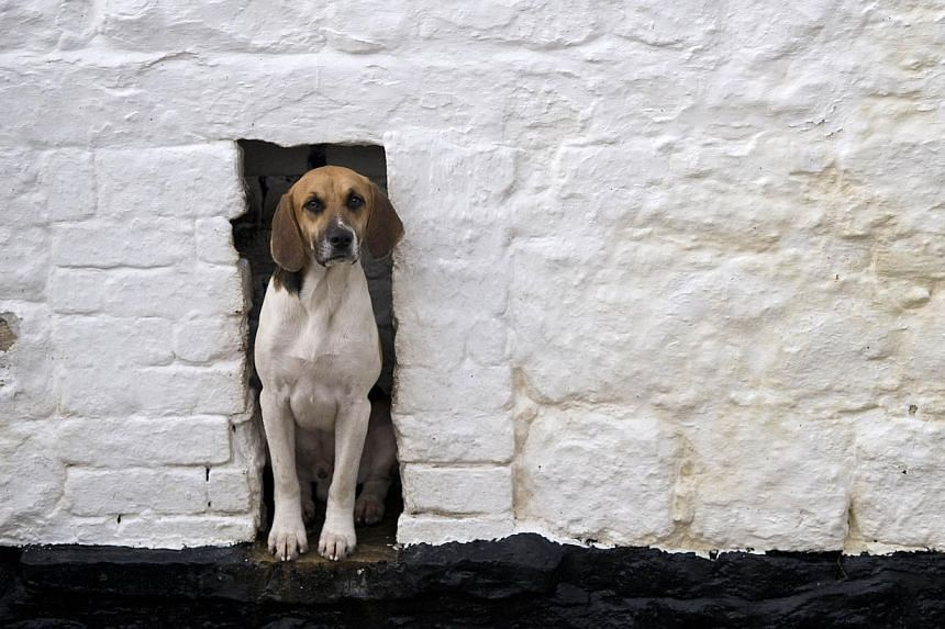 Dog lovers in Iran could face up to 74 lashes under plans by hardline lawmakers that would ban keeping the pets at home or walking them in public. -- PHOTO: AFP