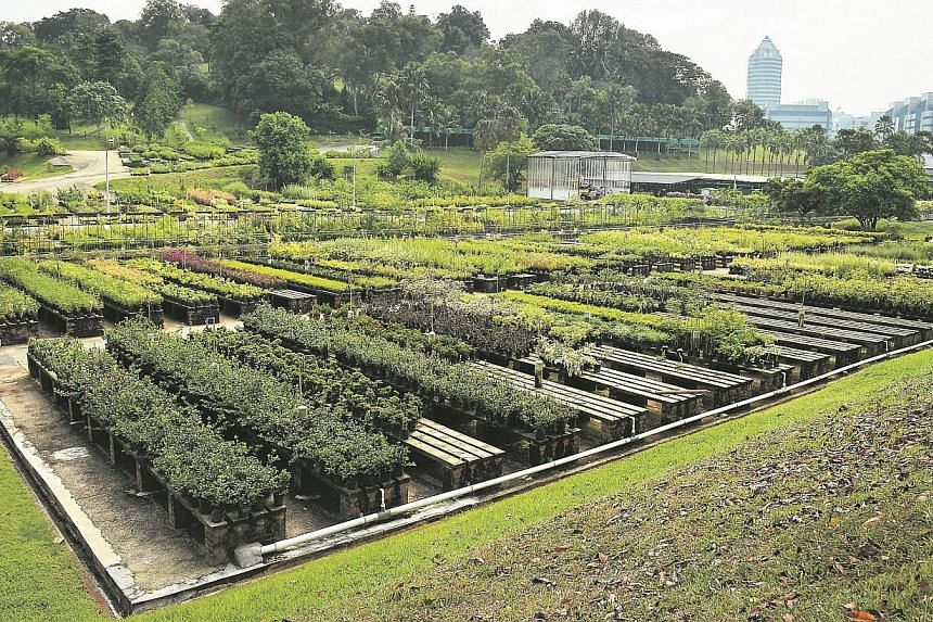 An aerial view of the Pasir Panjang Nursery which is the size of 17 football fields. -- ST PHOTO: KUA CHEE SIONG
