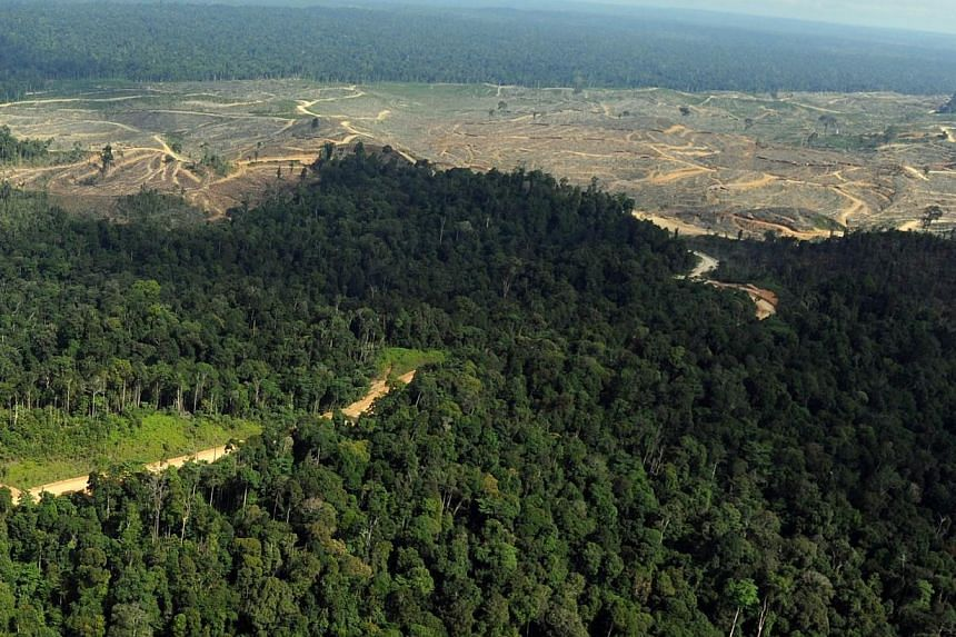 An aerial view taken on Aug 5, 2010, shows logged areas in the forest close to the Bukit Tigapuluh wildlife reserve in Sumatra islandm Indonesia. Australia Tuesday pledged A$6 million (S$6.69 million) to the fight against illegal logging as top