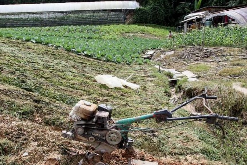 A ploughing machine left unattended in a vegetable farm in Tanah Rata, Cameron Highlands, as the farms face a shortage of workers. - PHOTO: THE STAR/ASIA NEWS NETWORK