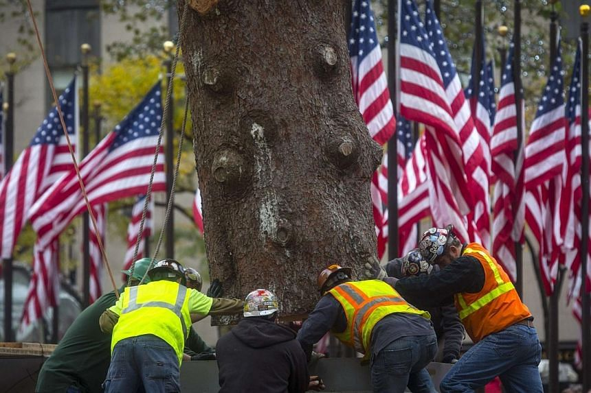 Workers secure an 85-foot-tall Norway Spruce from Hemlock Township, Pennsylvania into position as the 2014 Rockefeller Center Christmas Tree in New York on Nov 7, 2014. -- PHOTO: REUTERS