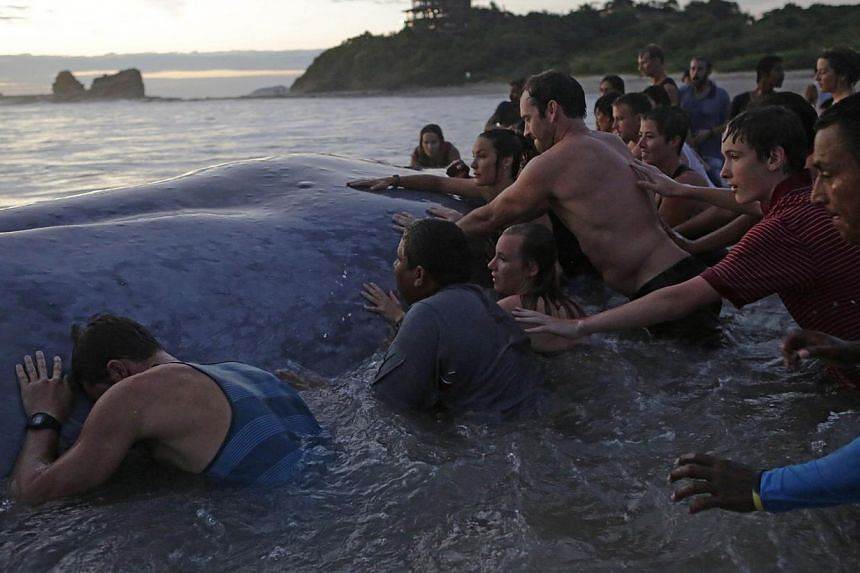 People remain at Popoyo beach, 35km from Rivas, Nicaragua on Nov 14, 2014, as others try to help a stranded whale. -- PHOTO: AFP