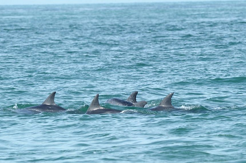 Dolphins are regularly spotted in the north-facing bay between St John's and Lazarus islands. Last week, a pod of five pink dolphins was spotted in the area by scientists.