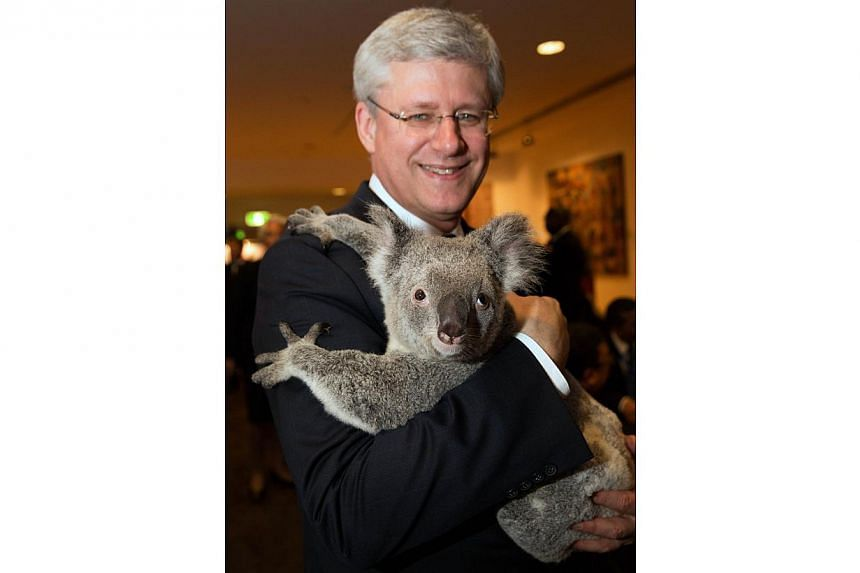 Canada's Prime Minister Stephen Harper holds a koala before the G20 Leaders' Summit in Brisbane in this Nov 15, 2014, handout photo by G20 Australia.-- PHOTO: REUTERS