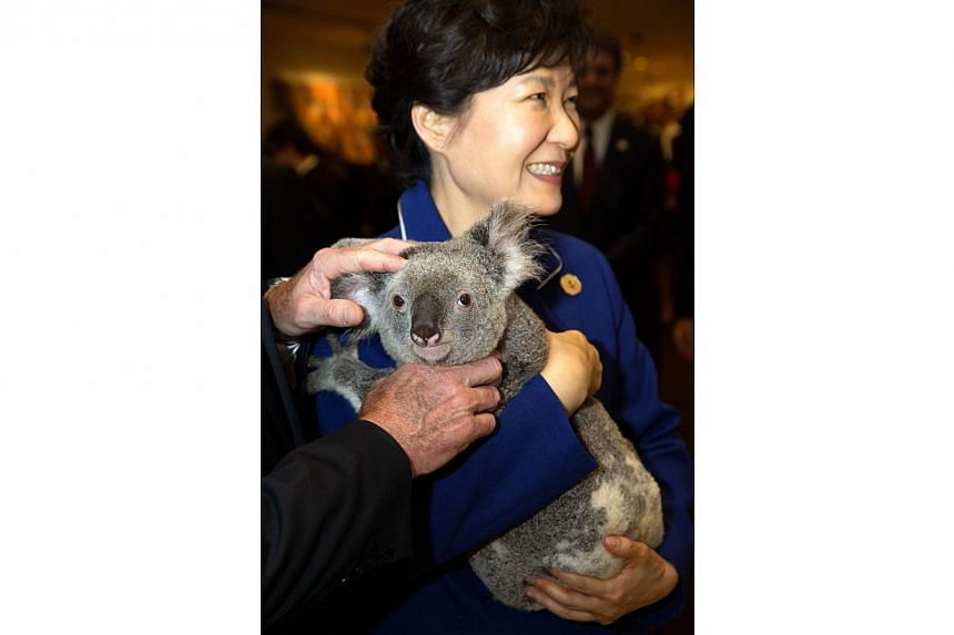 South Korea's President Park Geun-hye holds a koala before the G20 Leaders' Summit in Brisbane in this Nov 15, 2014, handout photo by G20 Australia. -- PHOTO: REUTERS