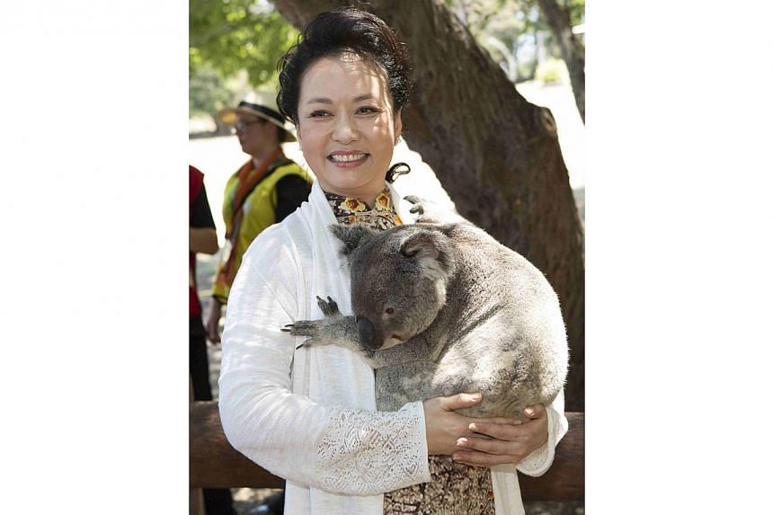Peng Liyuan, wife of China's President Xi Jinping, cuddles a koala at the Lone Pine Koala Sanctuary, as part of the G20 Leaders Spouse programme in Brisbane in this Nov 15, 2014, picture provided by G20 Australia. -- PHOTO: REUTERS