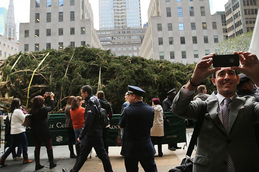 Bystanders watching as Rockefeller Center's Christmas tree, a 27m-tall Norway spruce, is being hoisted onto a platform on Nov 7 in New York City. A slowdown at Tacoma port amid a labour dispute could mean that thousands of Christmas trees grown in th