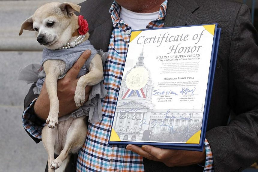 "Frida, a female Chihuahua, is shown next to a special commendation issued by the San Francisco Board of Supervisors naming Frida ""Mayor of San Francisco for a Day"" in San Francisco, California on Nov 18, 2014. -- PHOTO: REUTERS"