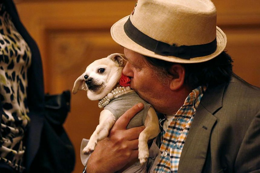 "Dean Clark kisses Frida, a female Chihuahua, while waiting for the San Francisco Board of Supervisors to issue a special commendation naming Frida ""Mayor of San Francisco for a Day"" in San Francisco, California on Nov 18, 2014. -- PHOTO: REUTERS"