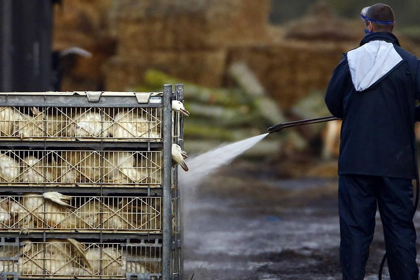An official sprays ducks during a cull at a duck farm in Nafferton, northern England Nov 18, 2014.The World Health Organisation cautioned on Tuesday that a new kind of bird flu hitting European poultry farms would spread among birds, after Brit