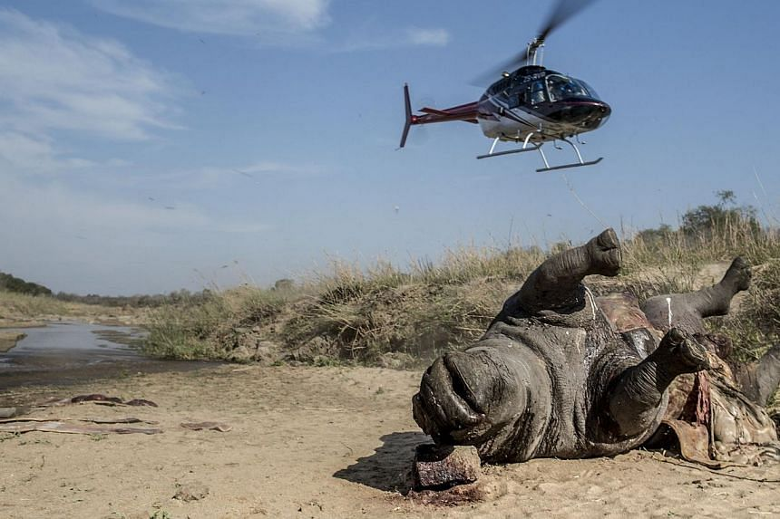 An helicopter takes off as the carcass of a poached and mutilated white rhino is seen laying on the banks of a river at Kruger National Park during a forensic investigation on Sept 12, 2014. A record 1,020 rhinos have been poached in South Afric