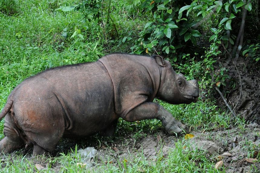 The Asean region's lowland rainforests are home to rare species like the Sumatran rhino. But the region also has a lack of effectively managed protected areas.
