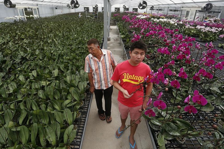 Among the farmers at Lim Chu Kang are Mr Lim Kah Hin (above), 54, owner of Yik Zhuan Orchid Garden, and his son Jack Lim, as well as Jurong Frog Farm's Ms Chelsea Wan (below, second from left), 31, with workers (from left) Mel Han, 24, Felicia Chin,