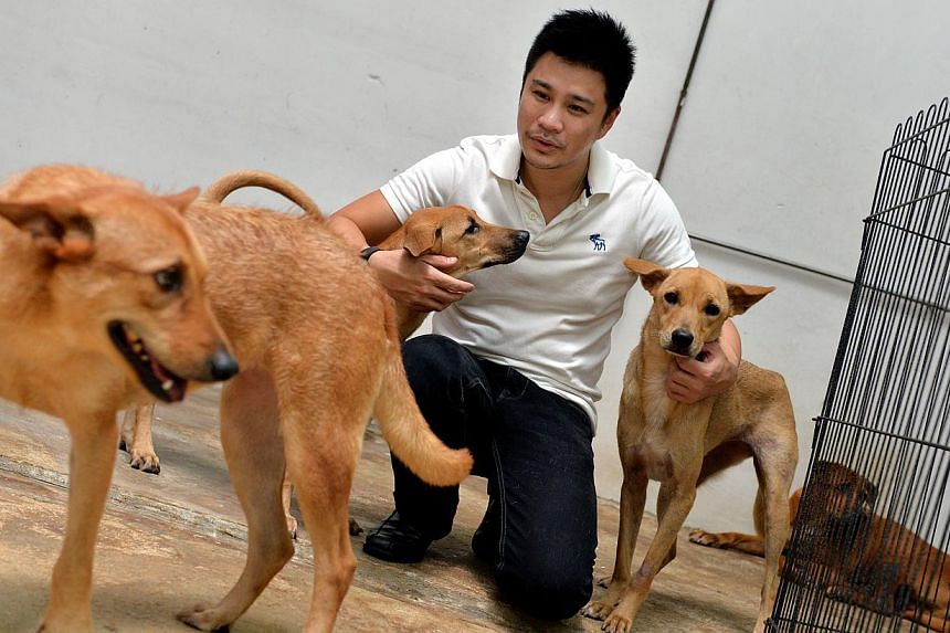 Dr Siew Tuck Wah, president of animal welfare group, Save Our Street Dogs (SOSD), with some of the rescued strays at the Pasir Ris shelter.Animal welfare groups need more financial support from businesses in order to deal with their high operat