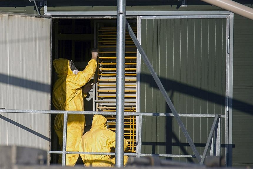 The Dutch authorities on Saturday ordered the preventative cull of 8,000 ducks amid fears that a bird flu outbreak could spread to the country's poultry heartland. -- PHOTO: REUTERS