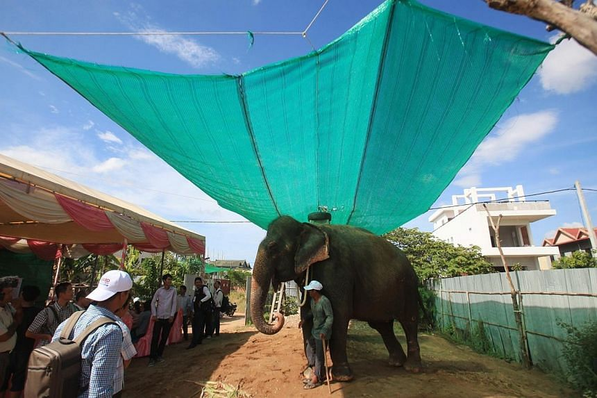 People gather around elephant Sambo during a farewell ceremony in Phnom Penh on Nov 25, 2014. -- PHOTO: REUTERS
