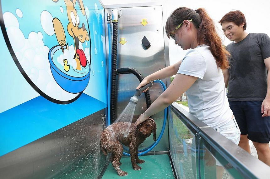 Staff nurse Vivien Lim and her boyfriend Alex Koh washing their miniature poodle Brownie at a K9000 station at pet service centre Sunny Heights in Turf City. -- ST PHOTO: NEO XIAOBIN