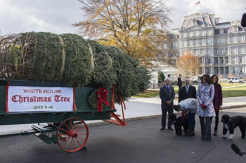 US First Lady Michelle Obama (second right), and her daughters Malia (right) and Sasha (third right) walk around as the White House Christmas Tree is delivered to the White House in Washington, DC, Nov 28, 2014. -- PHOTO: AFP