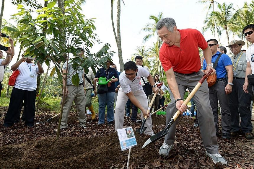 PM Lee and Dr Mohamad Maliki Bin Osman, Minister of State, Ministry of National Development & Ministry of Defence, planting a seashore nutmeg in Pulau Ubin.-- ST PHOTO: NG SOR LUAN