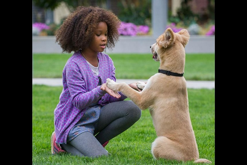 Here, Annie is played by Oscar-nominated child star Wallis (above, Beasts Of The Southern Wild, 2012), while Warbucks, renamed as Will Stacks, is played by Foxx. -- PHOTO: GOLDEN VILLAGE PICTURES