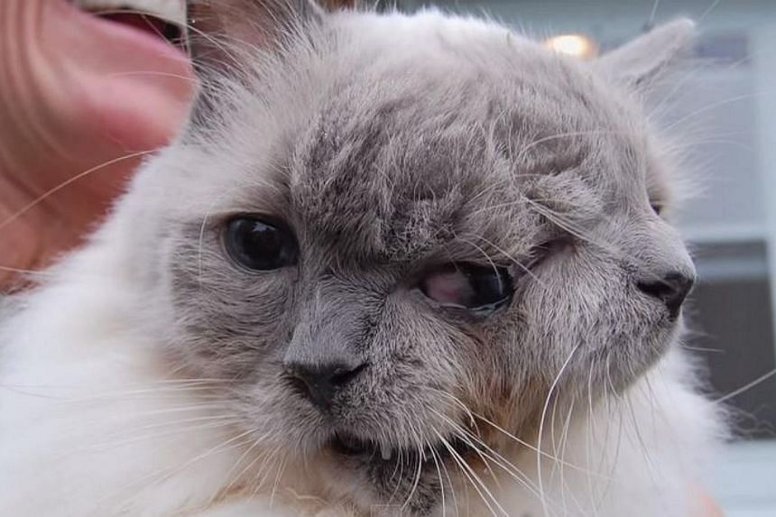 Frank and Louie, the world's oldest cat with two faces, has died at the age of 15 years on Thursday. -- PHOTO: TELEGRAM VIDEO/YOUTUBE