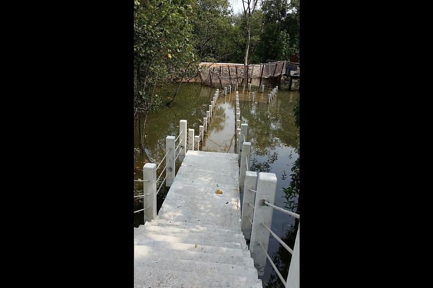 The Sungei Buloh wetland reserve extension has a coastal boardwalk and the floating platform (above) can be lowered to mud level during low tide. -- PHOTO: NPARKS