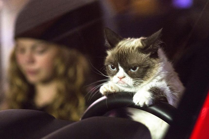 Megan Charpentier and Grumpy Cat in Grumpy Cat's Worst Christmas Ever. -- PHOTO: LIFETIME