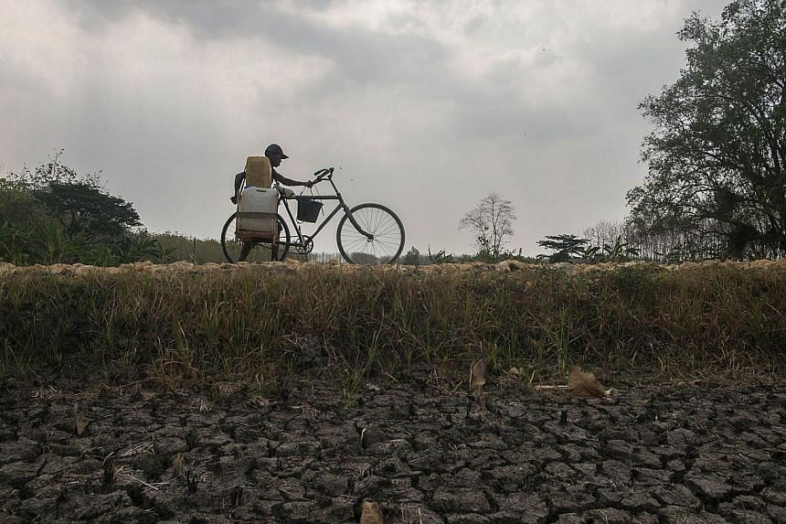 In this photograph taken on Oct 30, 2014, a resident pushes his bicycle carrying plastic containers filled with potable water along a dried up rice field in Lamongan located in eastern Java island as parts of Java experience water shortages due to th