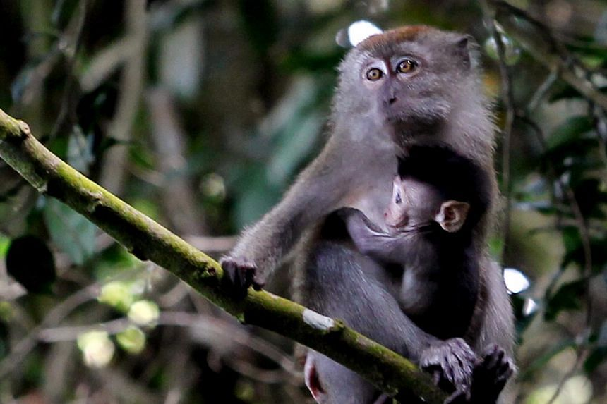 The one-year project to track the movements of monkeys from different groups will start next year. There were 420 monkey- related complaints this year as of mid-August, compared with 1,860 last year and 920 in 2012.