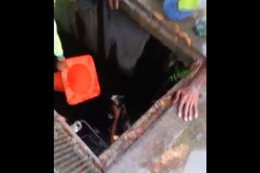 A few Indian nationals have earned themselves praise and respect for rescuing a struggling cat from a drain. -- PHOTO: YVONNE HAIRSTYLES/ FACEBOOK