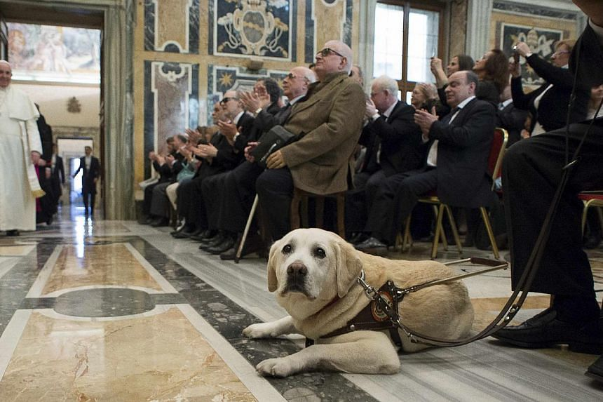 A guide dog is seen as Pope Francis arrives to attend a special audience with Italian Blind Union at the Vatican on Dec 13, 2014. -- PHOTO: REUTERS