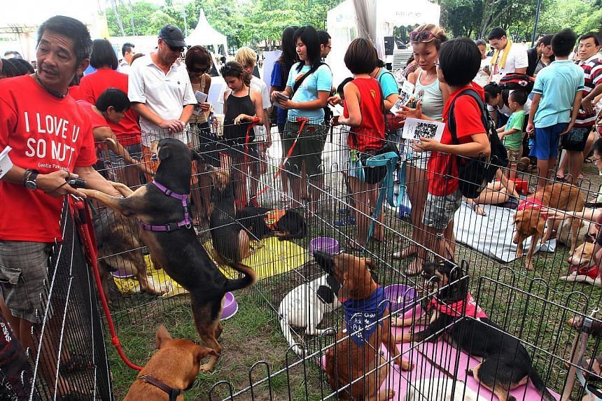 Singapore's largest dog adoption drive organised by the National Geographic Channel at East Coast Park last year. Facilities where joggers and families can interact with animals at the park are likely to be developed, said Manpower Minister Tan Chu