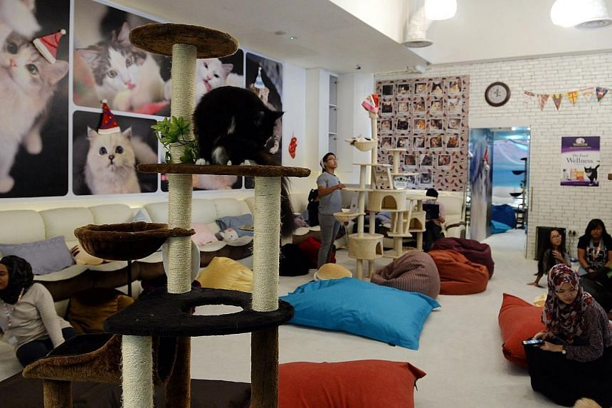 Cuddles Cat Cafe, the largest pet cafe in Singapore, spanning 2,500 sq ft at *Scape in Orchard Road. The owner of a cat cafe which is being investigated over the deaths of seven of its cats has offered his shop up for sale. -- BH PHOTO: MOHD TAU