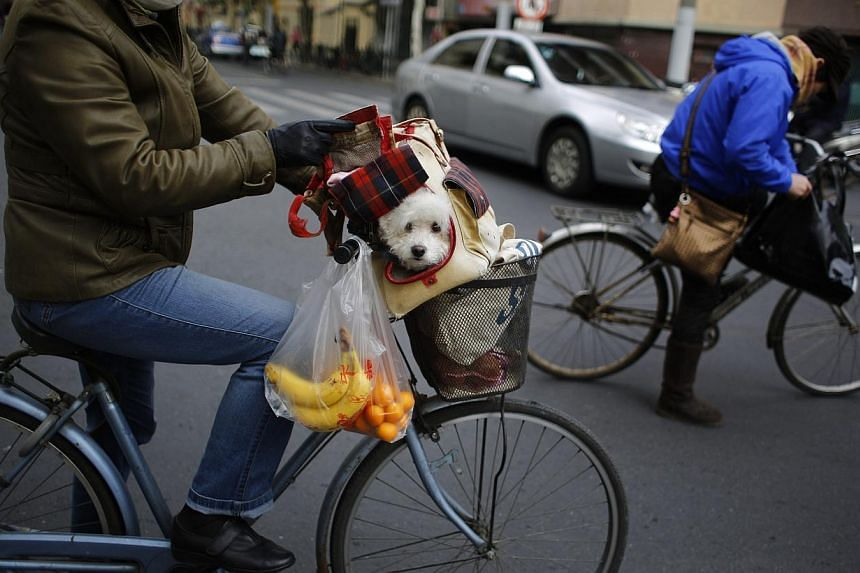 A woman carries a dog inside a basket on her bike along a busy street in downtown Shanghai, on Dec 7, 2014. -- PHOTO: REUTERS
