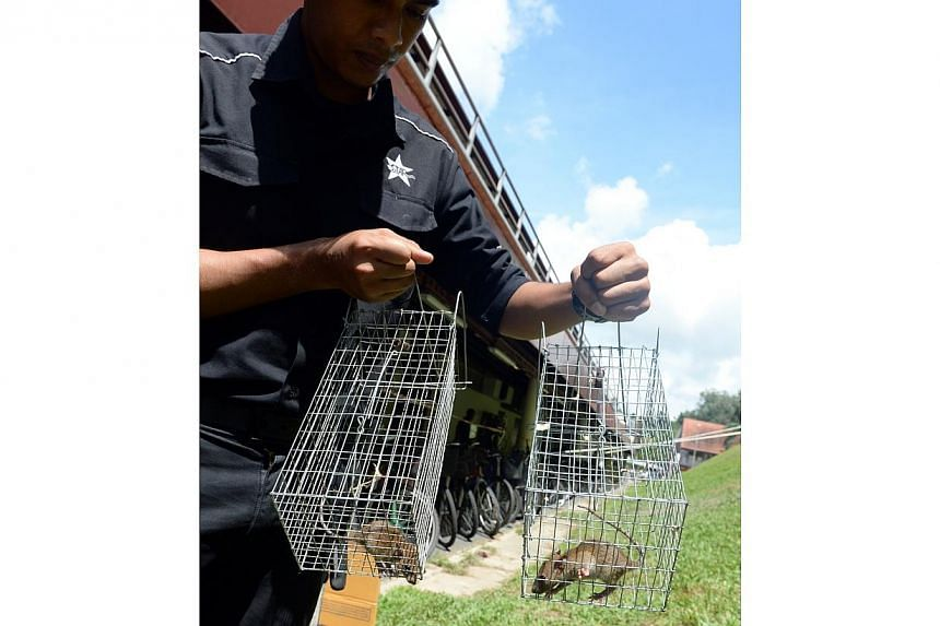 Rat-catching operations began in Bukit Batok on Thursday morning after a video showing a rat colony next to the MRT station had gone viral. -- ST PHOTO: AZIZ HUSSIN