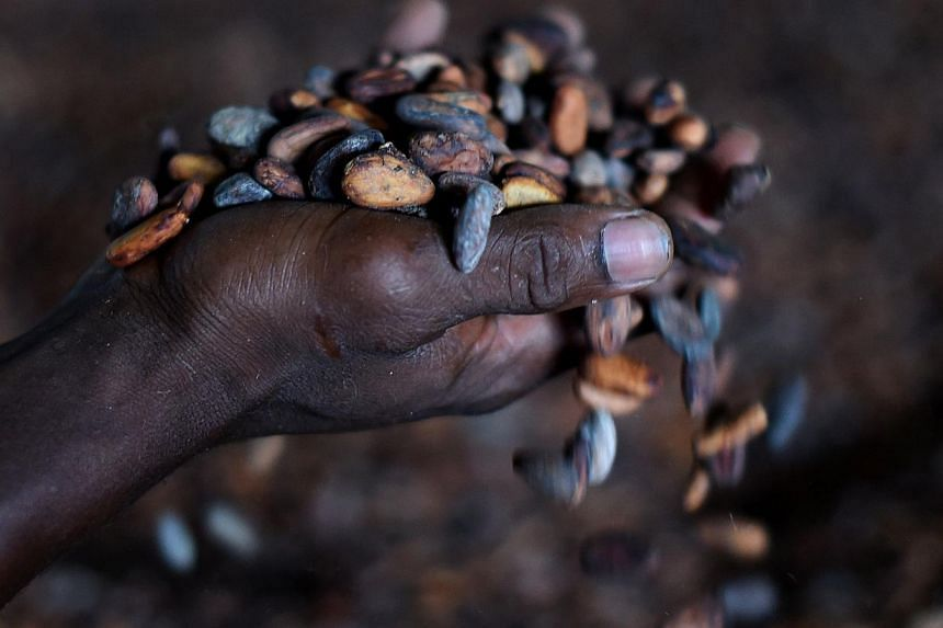 A worker touches cocoa beans as they are put to dry at a trading post in Kenama, southeastern Sierra Leone. Agri-business giant Olam's US$1.3 billion deal to buy rival Archer Daniels Midland's cocoa processing business may reduce liquidity in the nic