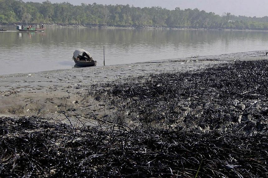 A Bangladeshi villager walks past oil-covered vegetation on the banks of the Shela River after an oil-tanker carrying 350,000 litres of furnace oil collided with another vessel in Mongla on Dec 14, 2014. -- PHOTO: AFP
