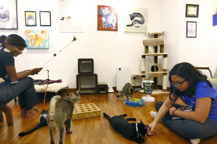 The Muses section (left) of Lion City Kitty – a multi-concept social enterprise set up by former Gold 90.5FM DJ Jessica Seet – is where cats from the Cat Welfare Society have a temporary home until they are adopted. -- PHOTO: TED CHEN FOR THE STR