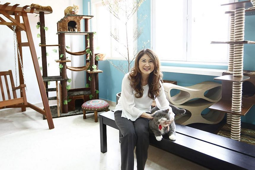 The Muses section of Lion City Kitty – a multi-concept social enterprise set up by former Gold 90.5FM DJ Jessica Seet (above) – is where cats from the Cat Welfare Society have a temporary home until they are adopted. -- PHOTO: TED CHEN FOR THE ST