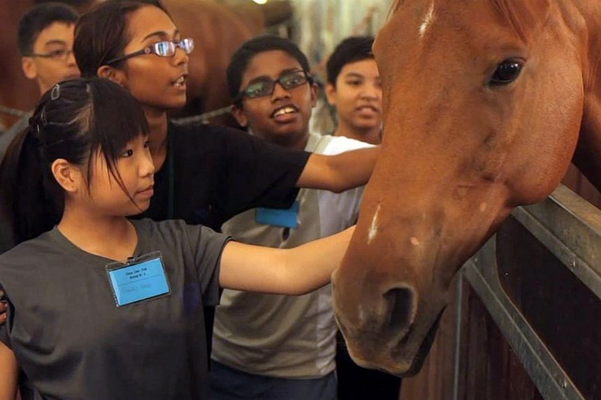 A group of 13-year-old students, guided by an instructor, petting a horse. Equal has worked with about 800 students, and hopes to bring in 400 more next year - double the usual yearly intake.