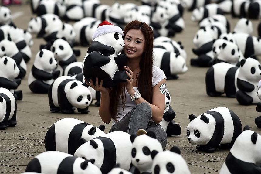 A Malaysian woman poses with some of the 1,600 papier-mache pandas displayed at Independence Square in Kuala Lumpur on Dec 21, 2014, as part of their first appearance in the city. -- PHOTO: AFP