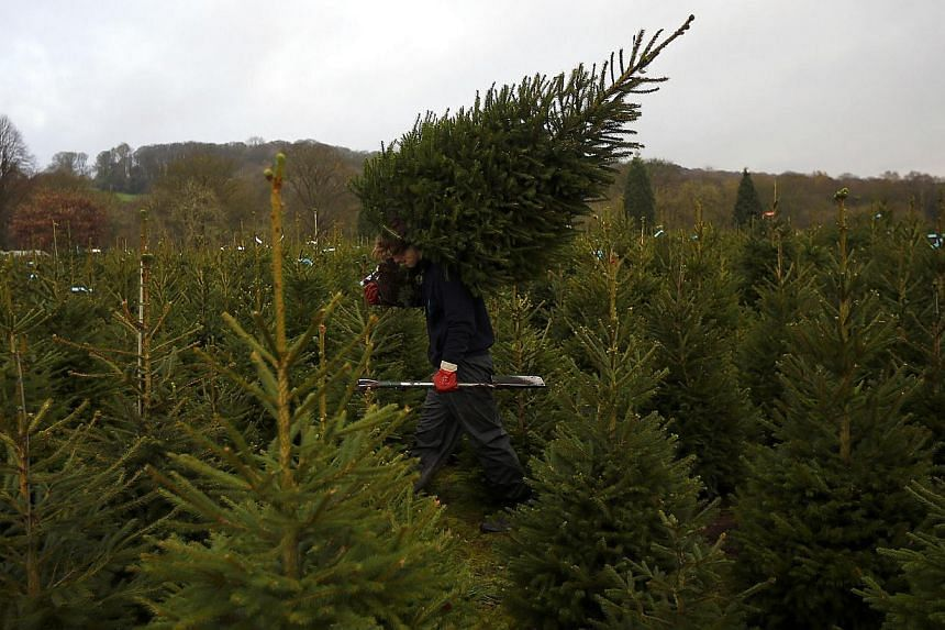 Sixteen Albanian migrants were found hiding in a truckload of Christmas trees waiting to board a ferry to England from the French port of Dieppe, a police source said on Monday, Dec 22, 2014. -- PHOTO: REUTERS