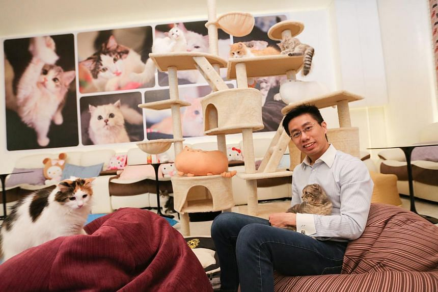 """Mr Jonathan Tan (above), the owner of Cuddles Cat Cafe in Orchard Road, expressed utmost """"regret and remorse"""" after seven cats died within three months of the cafe's opening. The Agri-Food and Veterinary Authority decided not to renew the pet cafe's"""