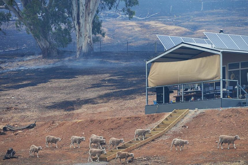 This picture shows charred earth near a home during fires near One Tree Hill in the Adelaide Hills, north-east of Adelaide on Jan 3, 2015. -- PHOTO: AFP