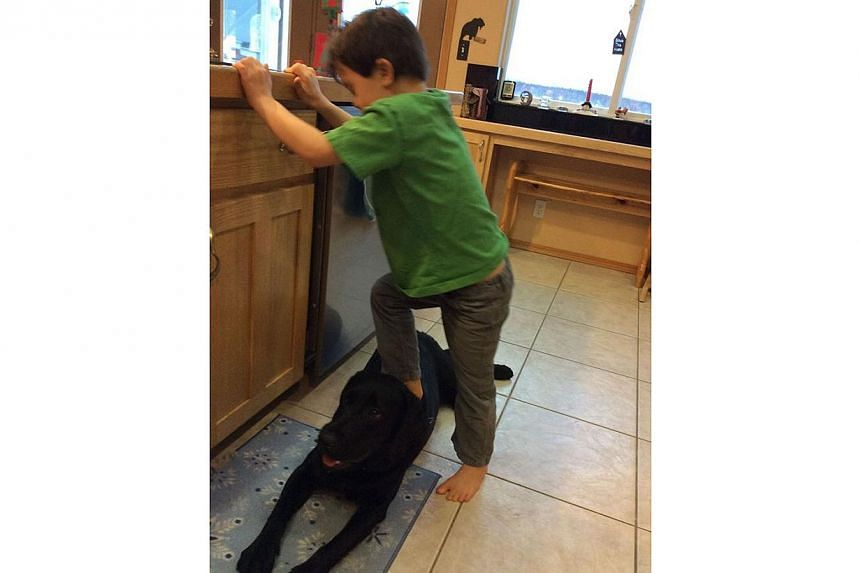 Facebook photos posted by Ms Sarah Palin showing her son, Trig, using the family dog as a step stool (above) unleashed online fury on Friday . -- PHOTO: FACEBOOK